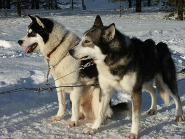 Photo: Lapland.com
